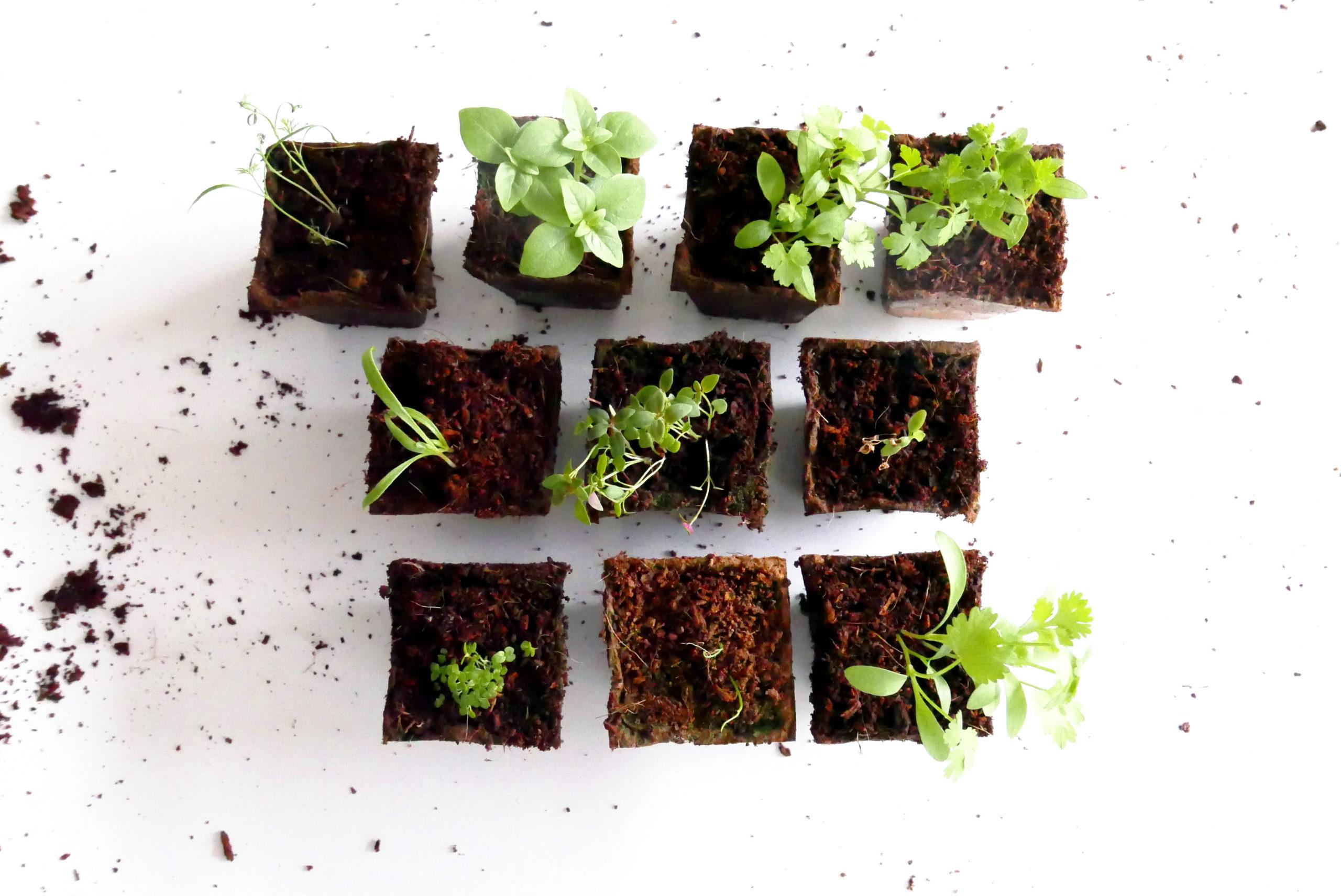 plantes aromatiques - jardiner en ville - jardinage intérieur
