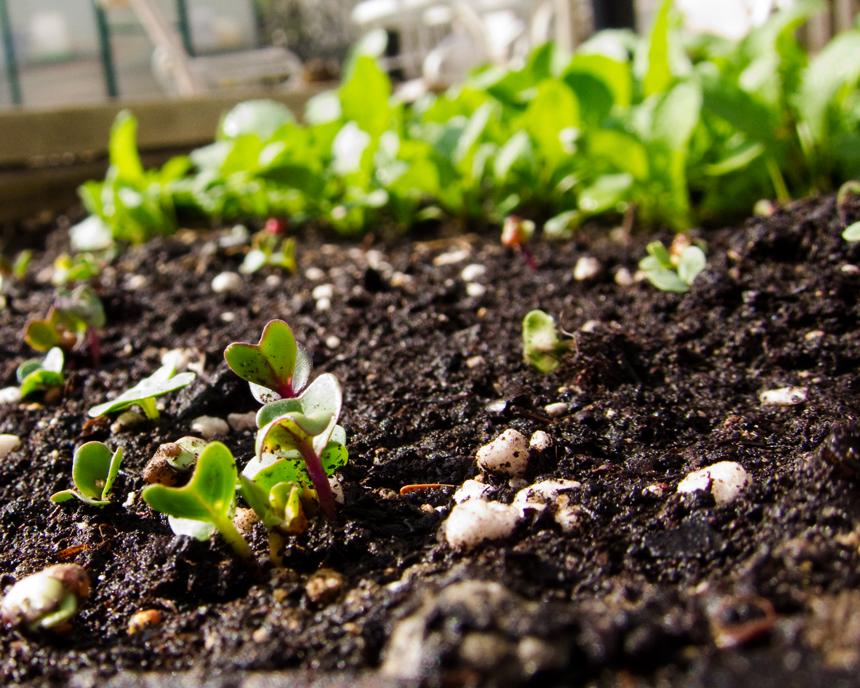 terrarium - le coin jardin - jardiner en ville - intérieur - déco - tendance
