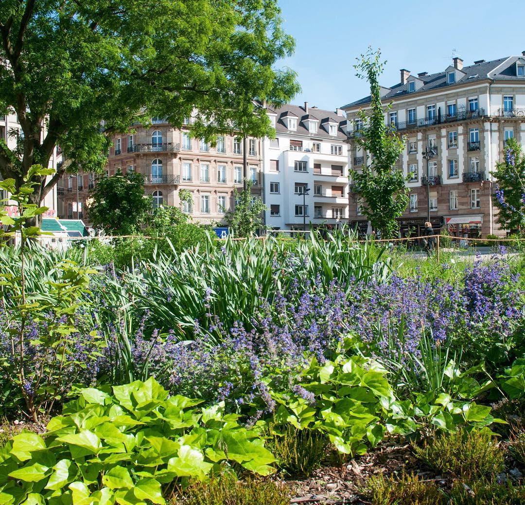 permis de végétaliser- jardiner en ville-ville-végétal-jardinier