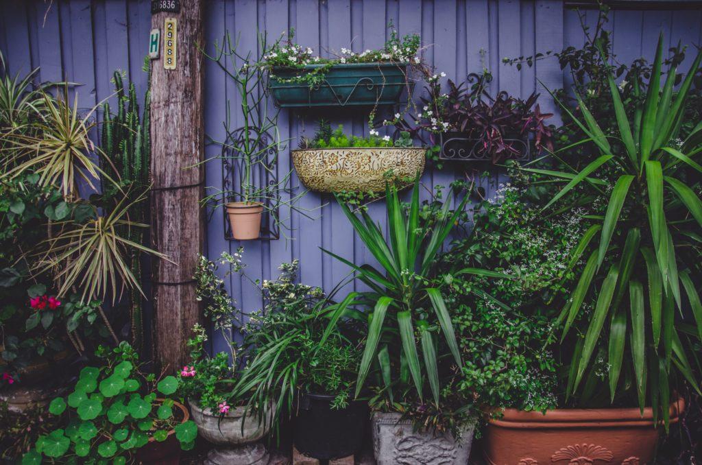 oasis, nature, balcon, jardiner en ville, permaculture, biodiversité
