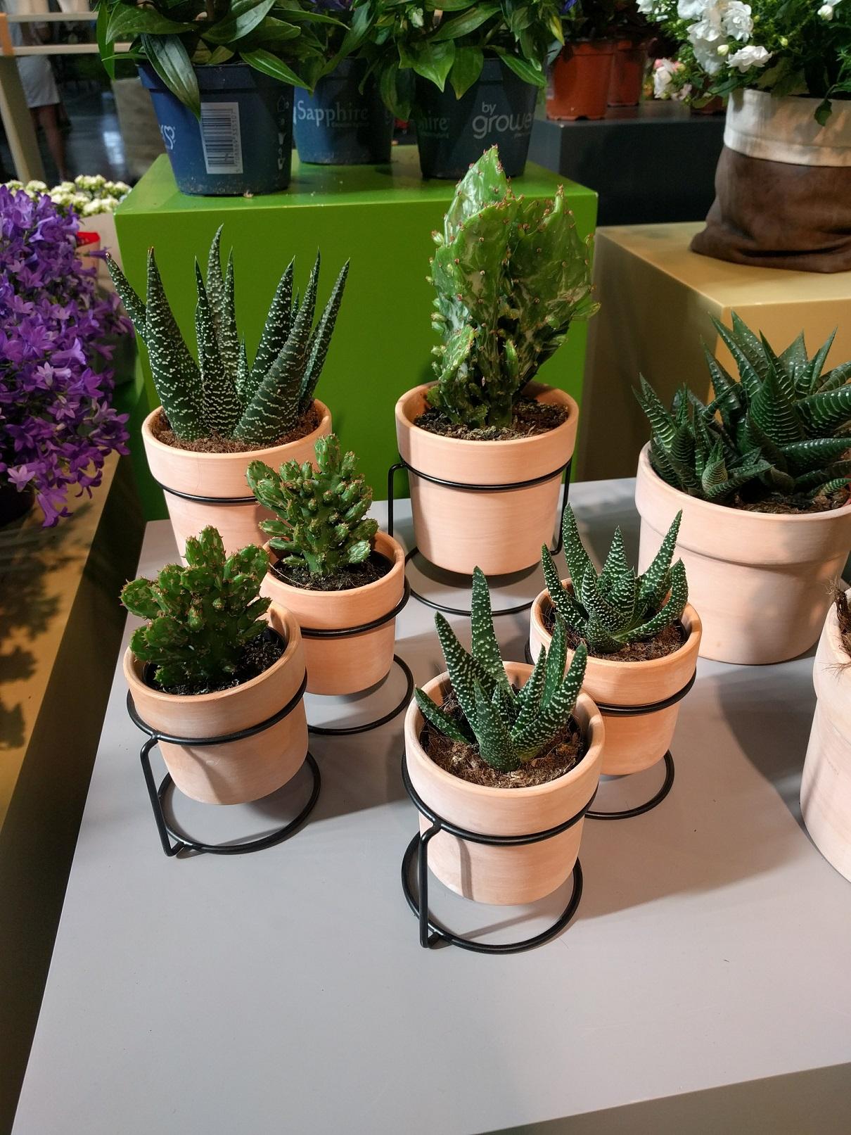 cactus - cactées - succulente - salon du végétal - jardiner en ville - easy care