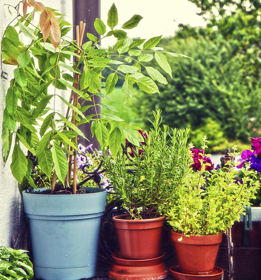 potager balcon - jardiner en ville - jardiner balcon - carré potager - potager facile