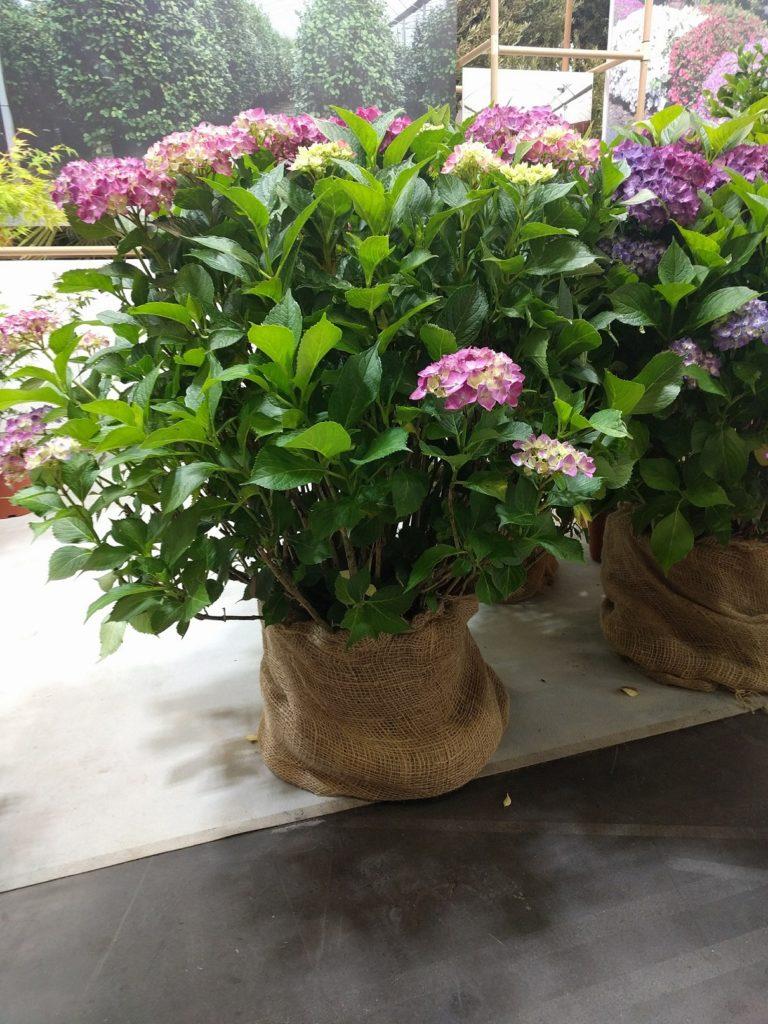 ombre - balcon - jardiner en ville - semi ombre - ombragé - plantes - aménagement - choisir