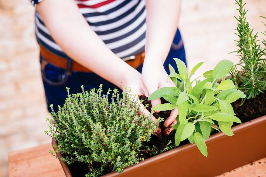 rempotage - important - conseils - plantes - plante - intérieur - rempoter