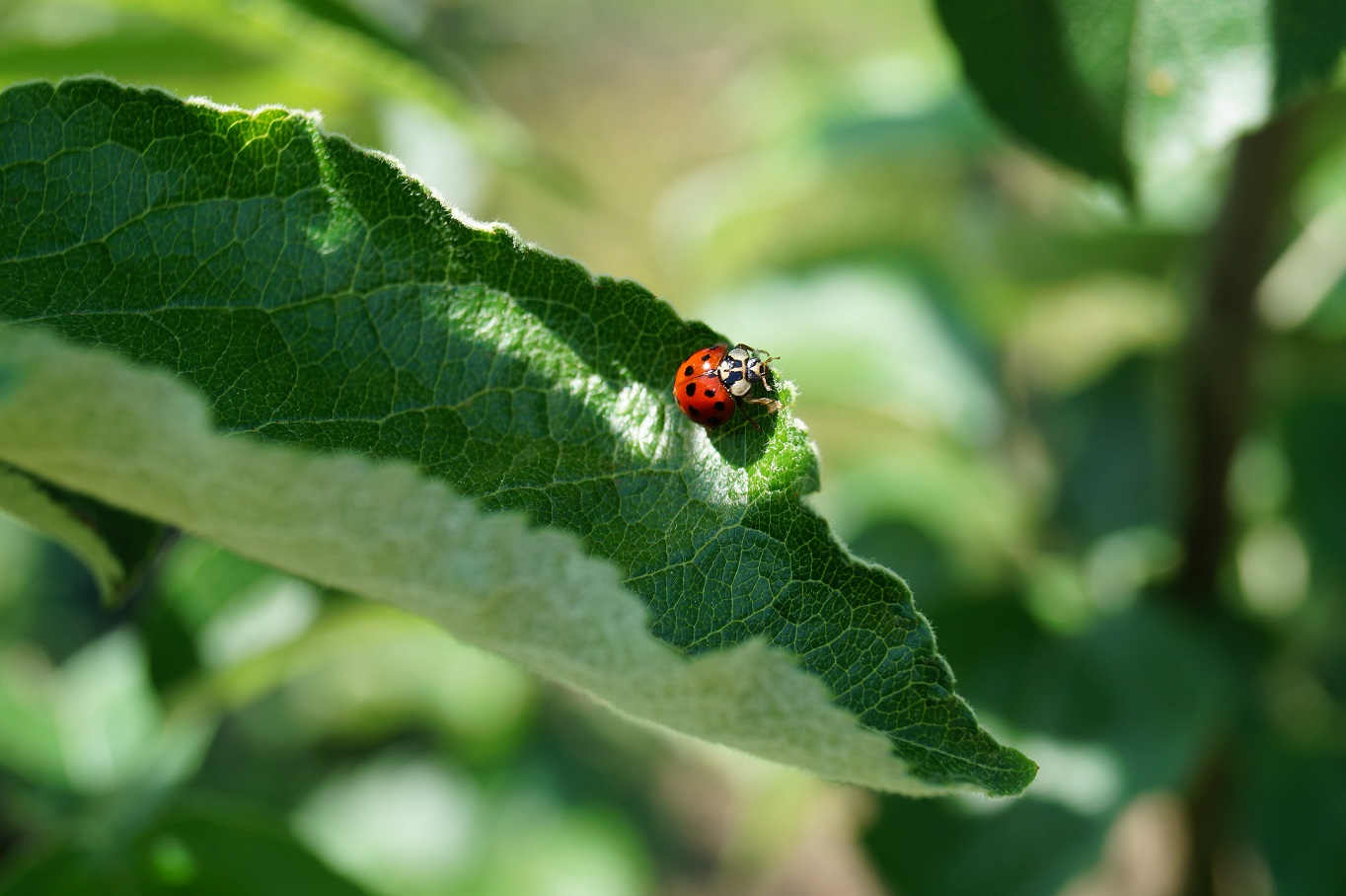 permaculture - jardin ressource - nantes - interview