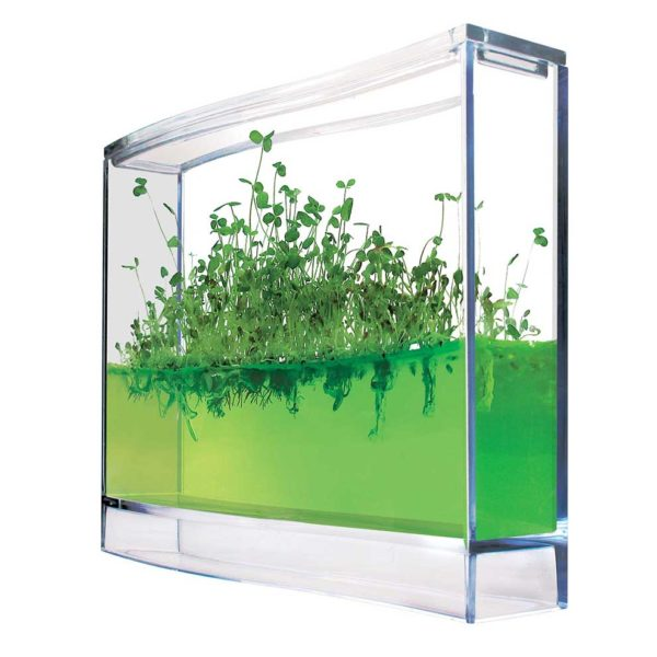 plantarium - végétal - ludique - gel - graines - cadeau