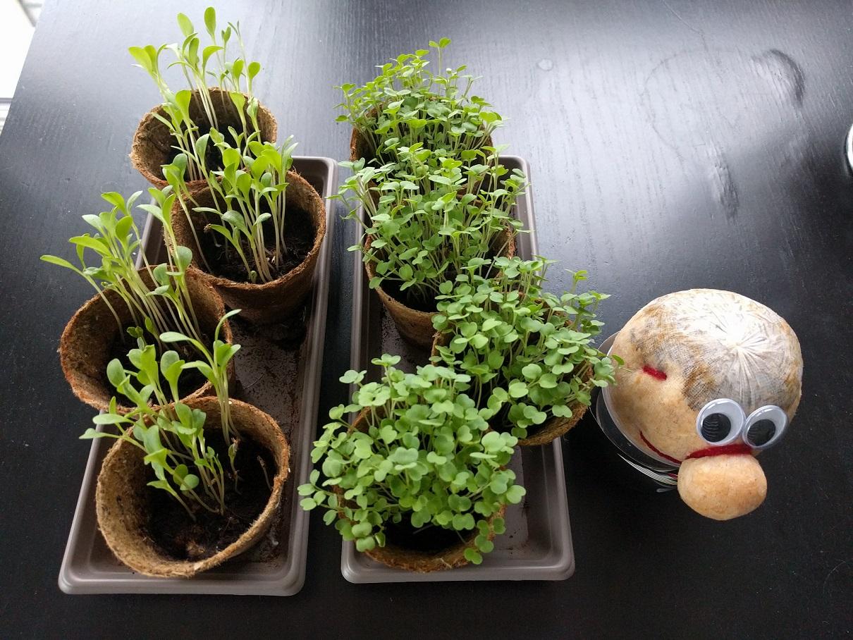 box - mon petit coin vert - jardinage - graine - jardiner en ville - test - avis