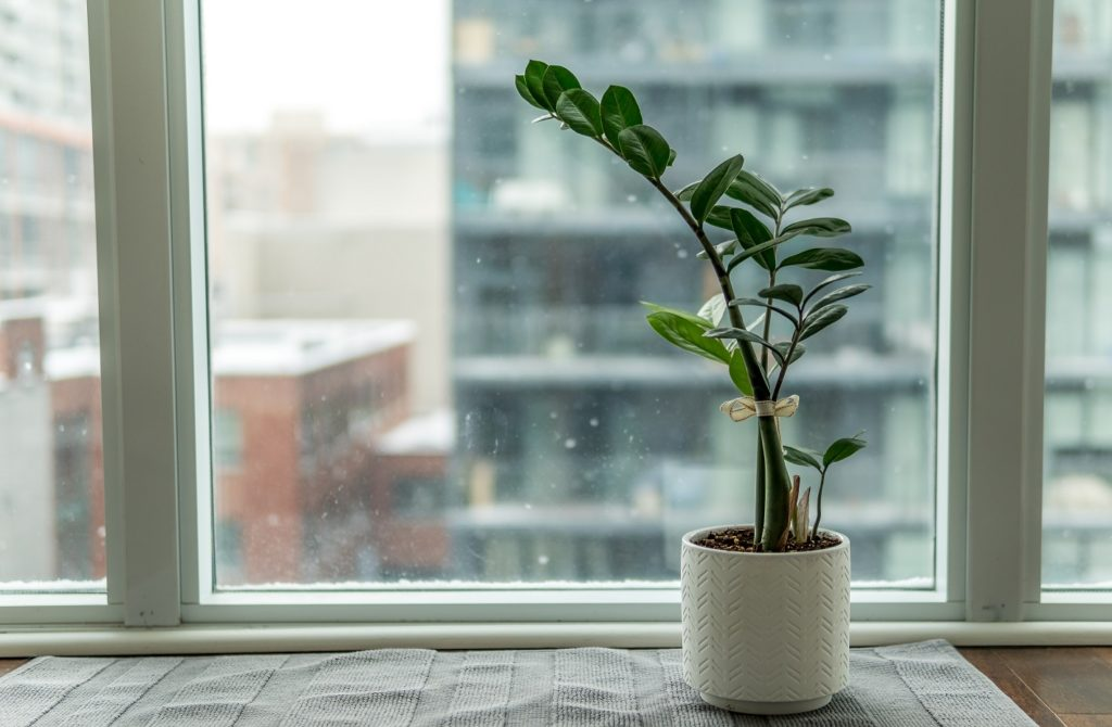 soin-plante-plantes-hiver-protéger-froid-intérieur