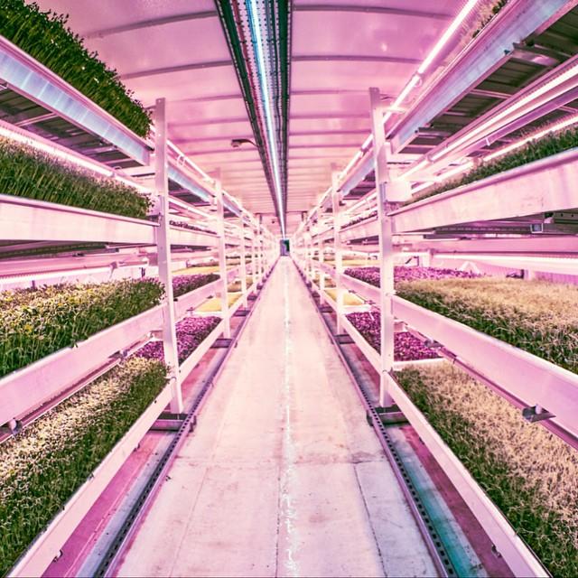 potager -metro-londres-growing underground-growingunderground
