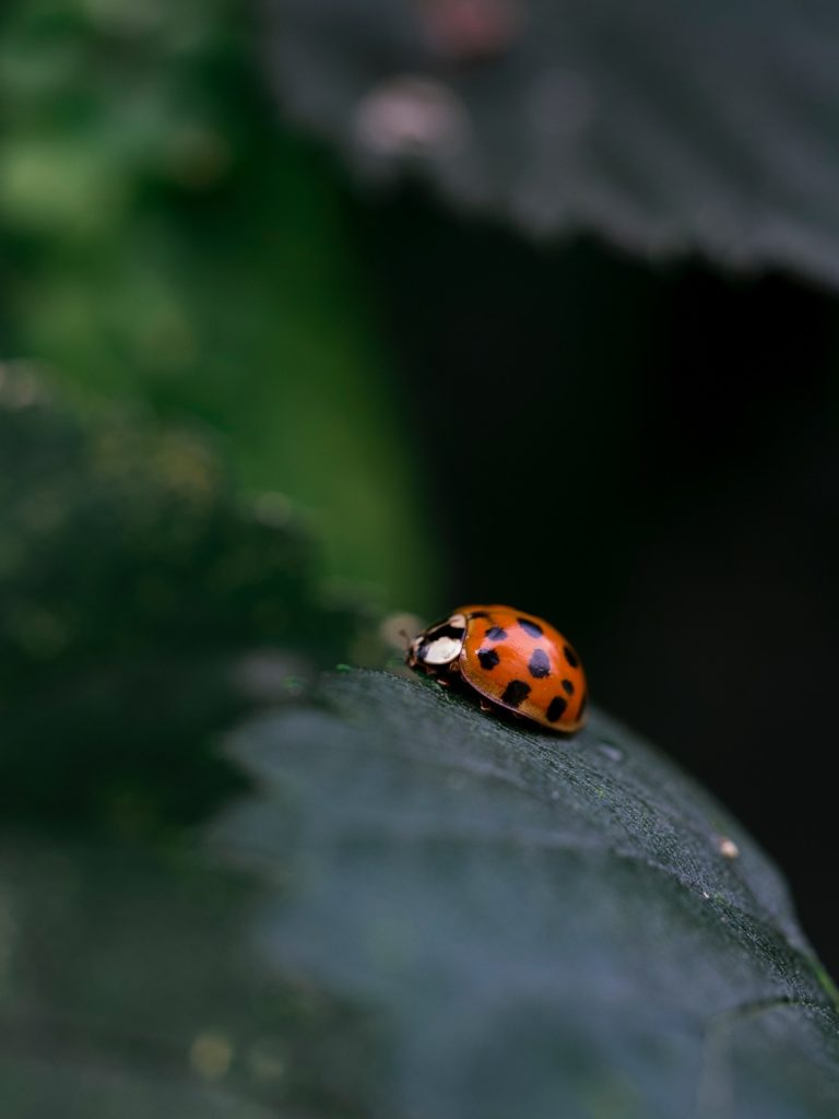 pesticide-bio-traitement-nuisible-maladie-plantes-astuces-grand mère