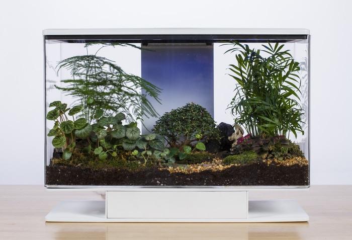terrarium, verdure, jungle tropicale, smart terra
