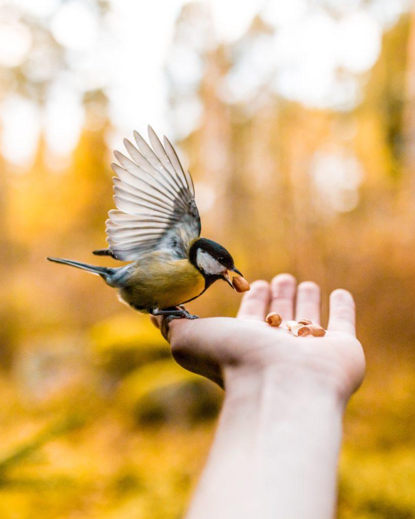 Photo by Taneli Lahtinen on Unsplash