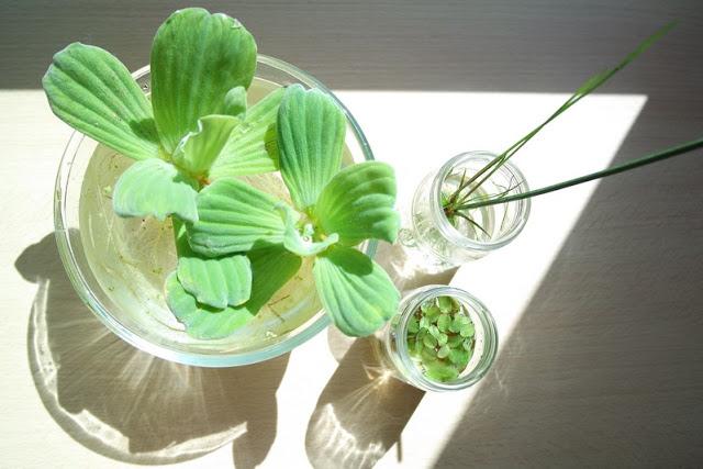 Christelle Bonnal - Les Petites Herbes - http://lespetitesherbes.blogspot.com