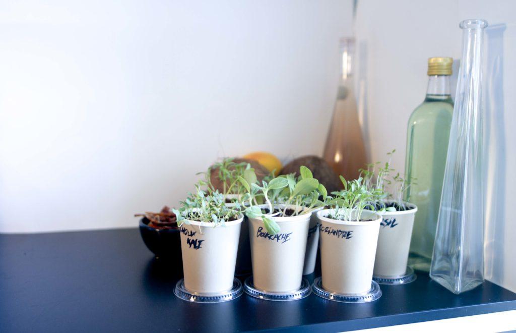 Cupplant - StockSnap