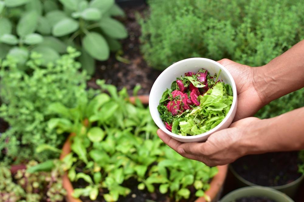 permaculture au balcon