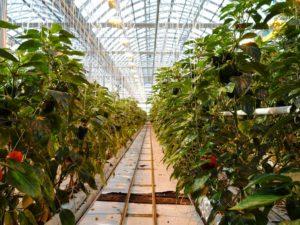 jardiner en ville agronaute