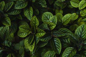 plantes bien-être