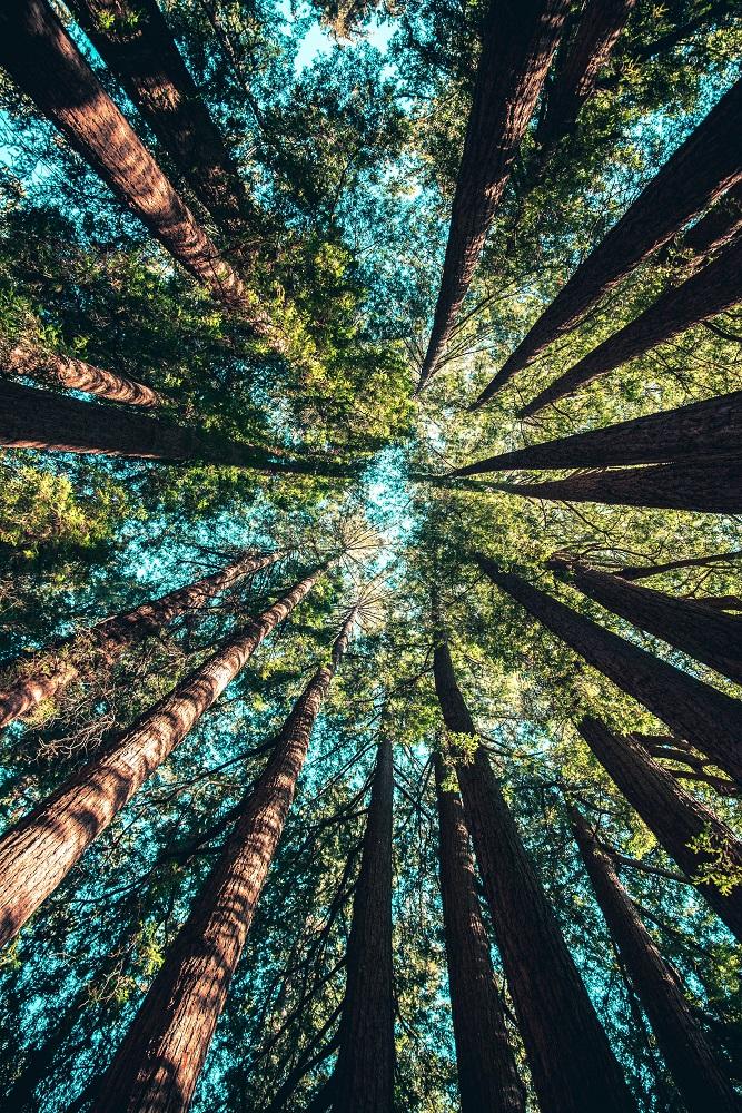 thérapie forestière - Manuela Peschmann