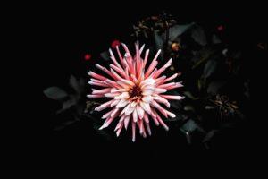 plantes - nuit - poussent - jardiner en ville