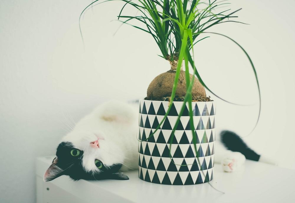 plantes - chats - conseils - sélection - herbes