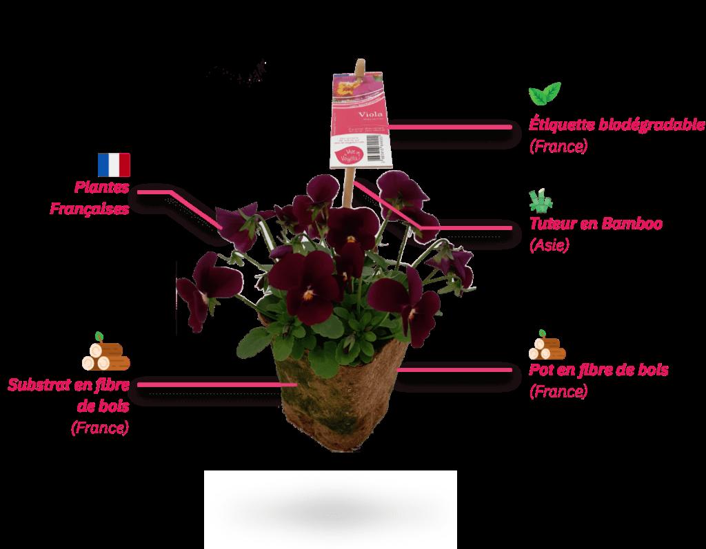 plante zéro déchet