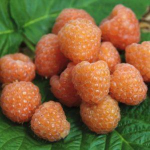 framboises oranges valentina